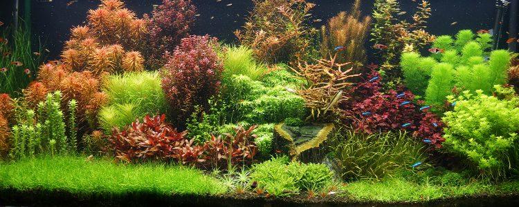 beplant aquarium large